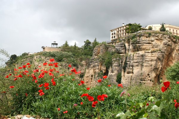Poppies on Ronda's cliffs: Wild poppies (Papaver) growing on the cliffs of Ronda, Spain.