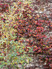 autumn wall colour1