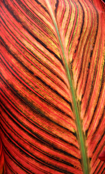 foliage colour5: large colourful broad leaved decorative plant foliage