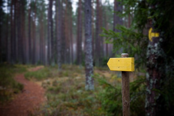 Arrow in the woods: A sign in the woods pointing in the walking direction. Out inte country in the south of Sweden.
