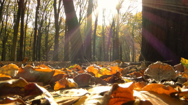 autumn day: Picture taken in a forest in Belgium