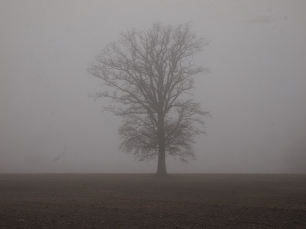 tree in the fog: no description