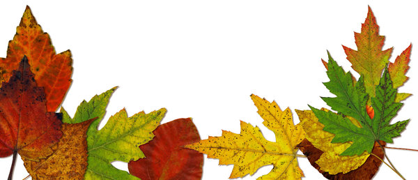Leaf Collage 2: Variations on an autumn leaf collage.If you like my artwork,please go to my FacebookBusiness Page and like it:Billy Frank Alexander Design~ God Bless You! :-)~ Billy