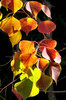 light & shadow autumn leaves1