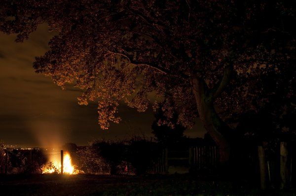 Bonfire Night: Glow of the bonfire under a tree