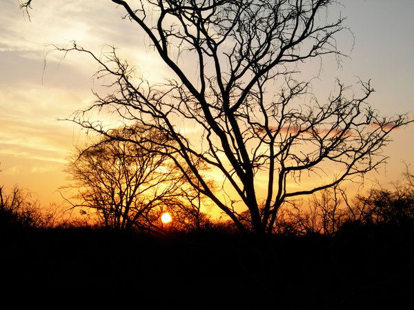 tree at sunset: photo taken in mozambique