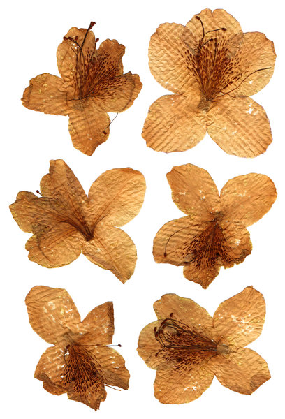 Vintage Pressed Flowers: A set of vintage pressed flowers.