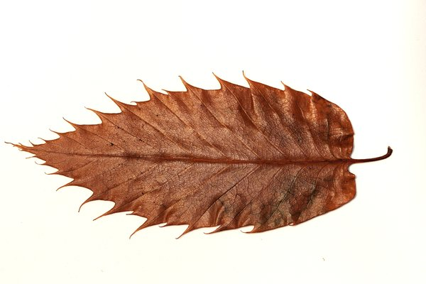 Autumn leaf: Autumn leaf