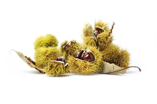Chestnuts #2: no description