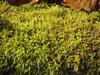 moss in sunlight