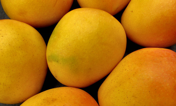 mango colour4: colourful golden ripe fresh mangoes