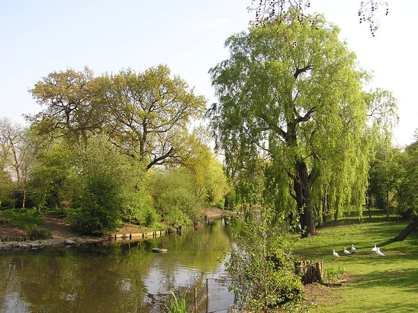 Willow in the park: Regent's Park in London