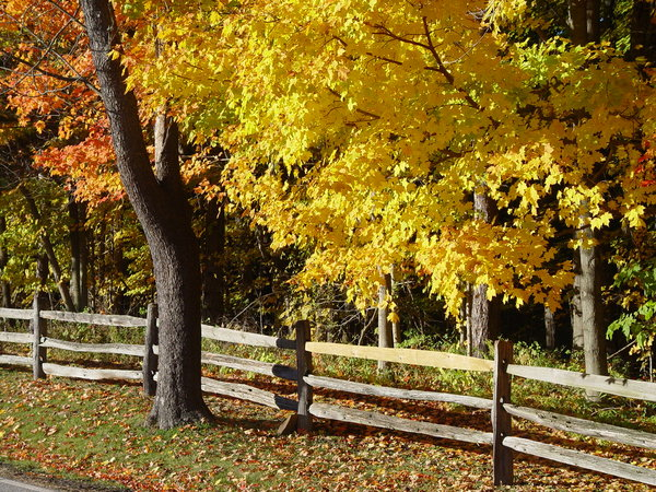 Fall in the country: Autumn leaves and a split rail fence along a country road in Ohio