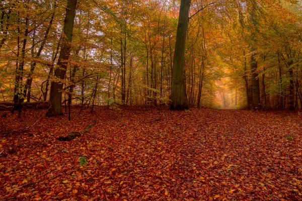 Forest bed in autumn - HDR: Forest bed from a very low point of view. The colors are from atumn / fall. The image is HDR.