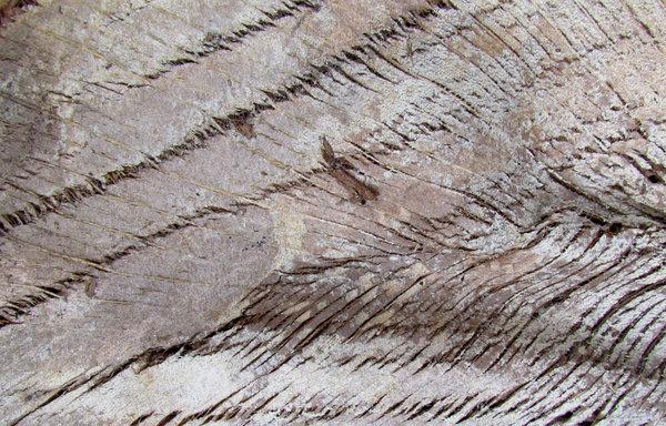 Broken Tree Branch Texture Palm tree wood texture
