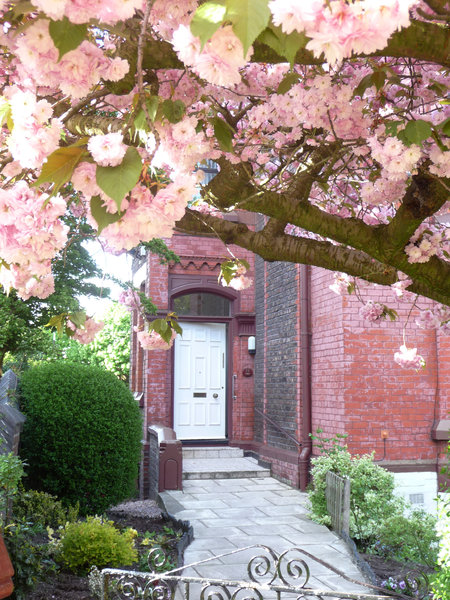 Cherry Blossom Door: My door transformed by cherry blossom in spring