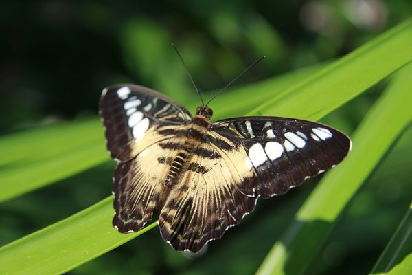 Butterfly gardin: Butterfly garden located in Gainesville Florida