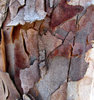 peeling bark textures1