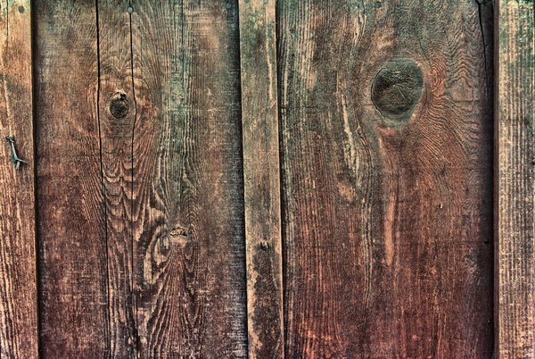 Grungy Fence Boards: A texture of wood grain and knots on a section of backyard fence.