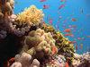 Diving in Egypt near Dahab in
