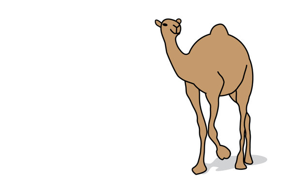 Dromedary: A dromedary for you!If you want to place this one-humped camel against your own background (see my example below), contact me and I will send an eps or png.
