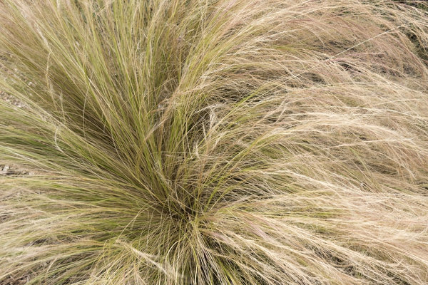 Free stock photos rgbstock free stock images for Ornamental grass yellow