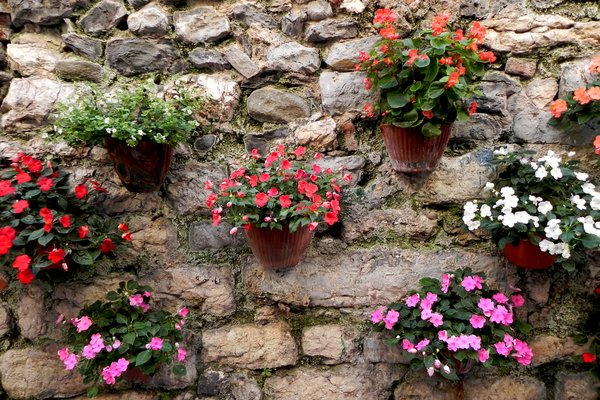 assorted potted flowers: assorted potted flowers arrangement against stone wall