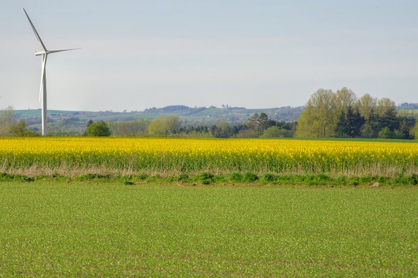 Blue, yellow and green - HDR: Blue sky, yellow rape (oil seed), green grass and a windmill in a spring landscape. The image is HDR.