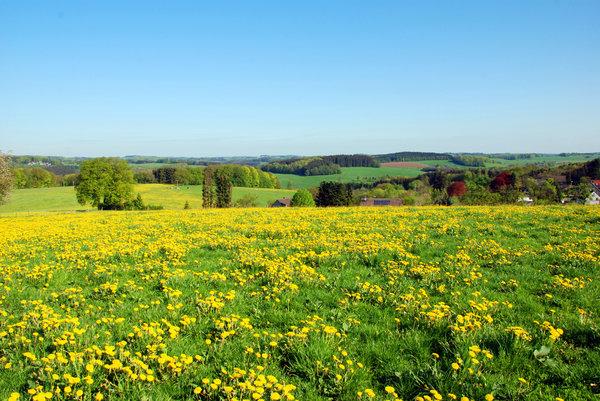 Image result for spring walk