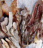 peeling bark textures12