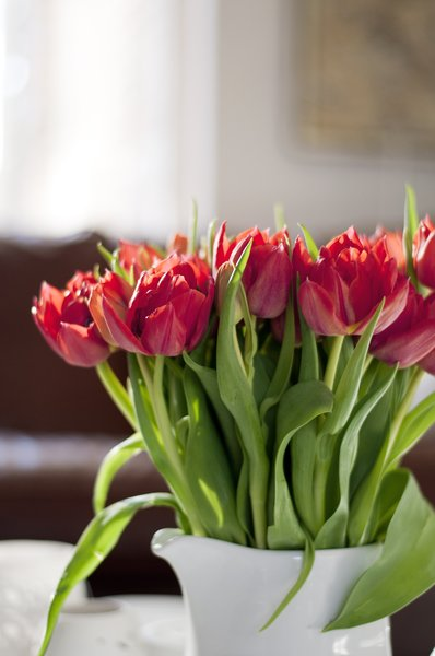 Red Tulips: Stunning red tulips in the living room