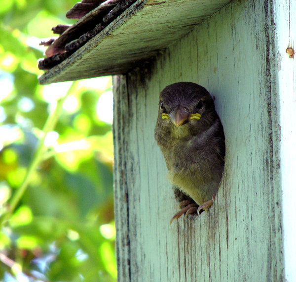 What Are U Lookin At?: I just had to share this photo. After waiting almost a half hour for this little guy/gal to come out of the bird house, he/she finally emerged with this expression on his/her face. Very Cute. Not too sure what kind of bird though.
