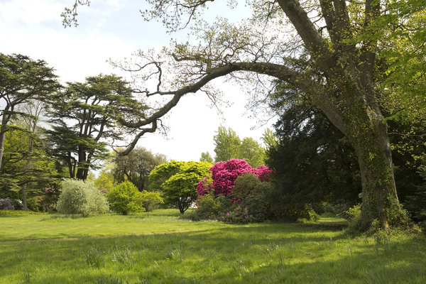 Woodland garden: A woodland garden in West Sussex, England, in spring.