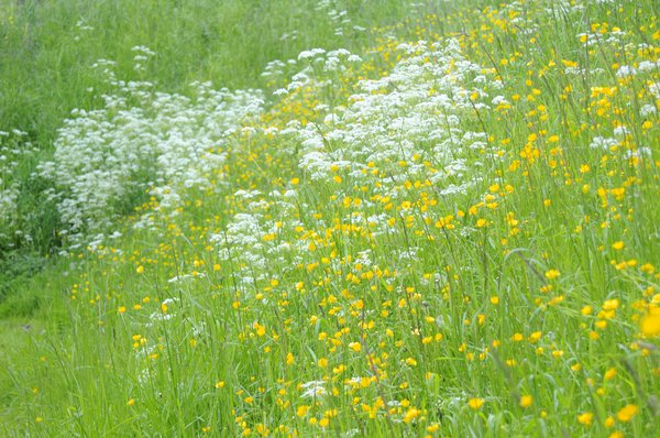 Flowers: grassy flower landscape