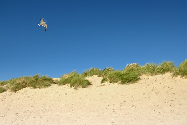Sea: Sand dunes against a very blue sky