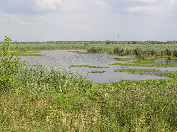 Lakes: Some ponds on the fields. Modlin area