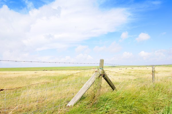 Landscape: Flat, dutch landscape with fence