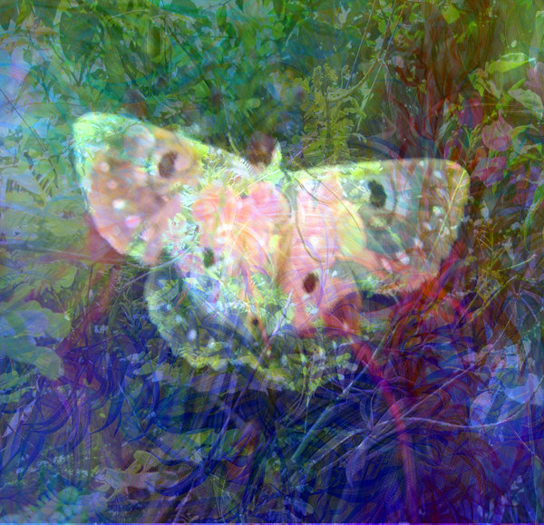 Vivid Fantasy Collage 6: A bright collage of natural shapes that are pleasing to the eye. This one features a butterfly. Perhaps you would prefer this: http://www.rgbstock.com/photo/nNTVSho/Dreamy+Pastel+Background+3