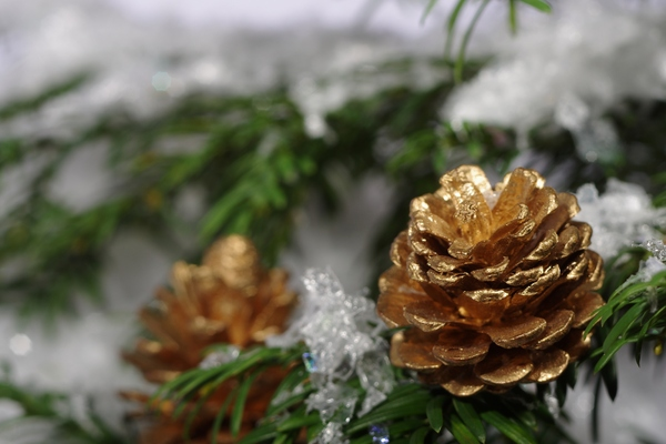 Golden cones on a tree: Golden cones on a christmas tree with snow