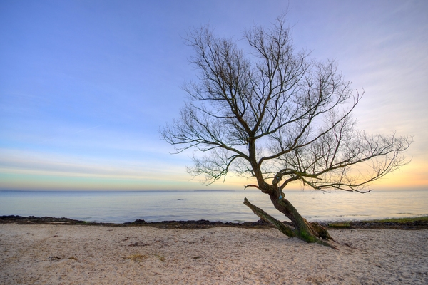 Tree on a beach - HDR: Lonely tree with a swing on a beach in front of colourful sky. The image is HDR. It is Öresund between Denmark and Sweden.