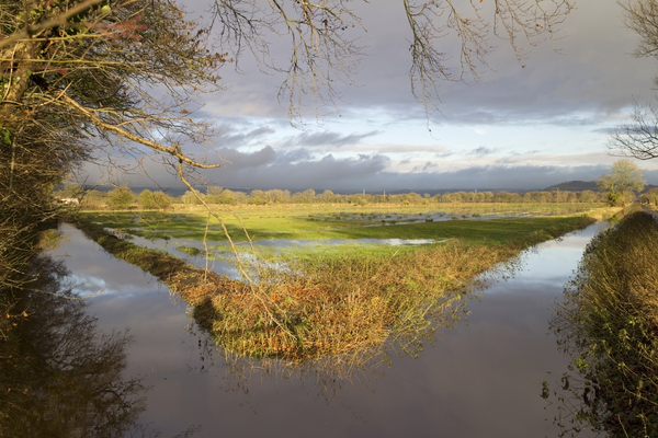 Flooded fields: Flooded fields in the Somerset Levels, England.