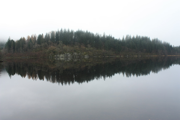 Loch reflections: Reflected shoreline in still loch
