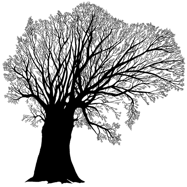 Winter Tree: An illustration of a winter tree.