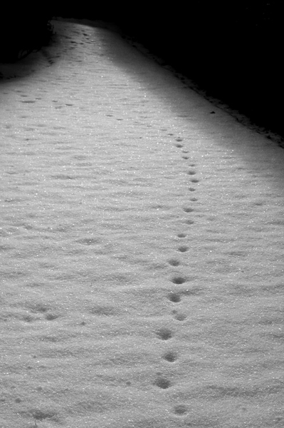 Spooky path: Trace on a path