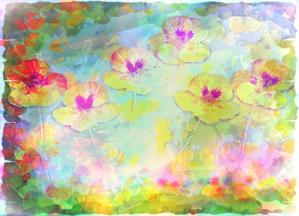 Nasturtium Abstract 7: A grungy abstract, arty image of nasturtiums in multiple pretty colours against a white background. You may prefer:  http://www.rgbstock.com/photo/n6cBw84/Nasturtium+Abstract+5
