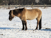 horse in winter 2
