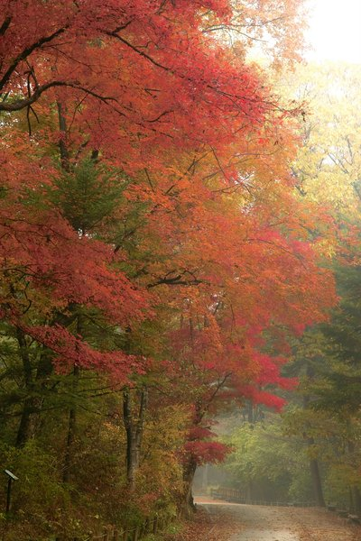 Autumn in Kwang Reung National: Autumn in Kwang Reung National Park KOREA