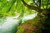 Natural River
