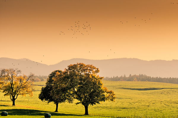 Autumn Scene near Mountains: Sunset on a Landscape near the Bavarian Alps - Meadows, Trees and Birds flying
