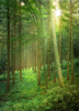 Sunlight in natural Forest